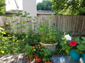 gardening with abandon